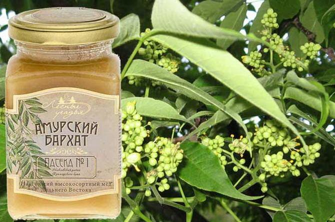 Мед «Амурский бархат» во Владивостоке