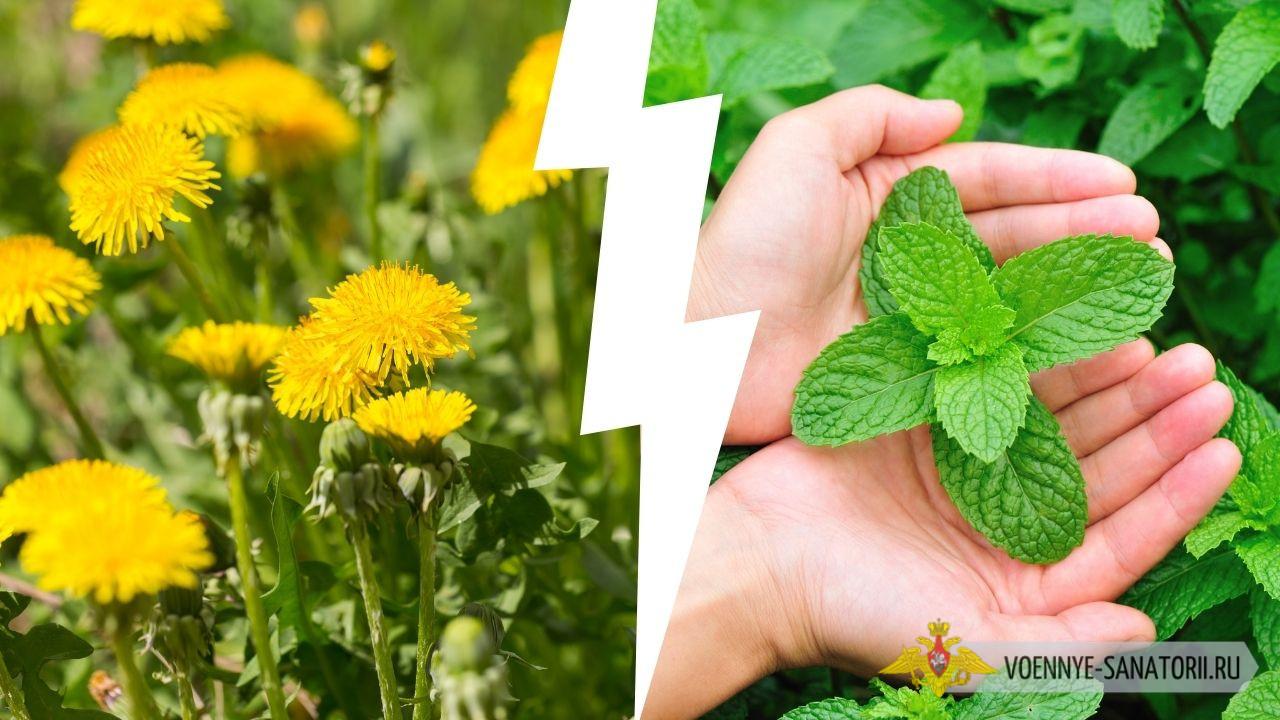 Дачникам напомнили о наказании за сорные растения на садовых участках — сколько возьмут штраф